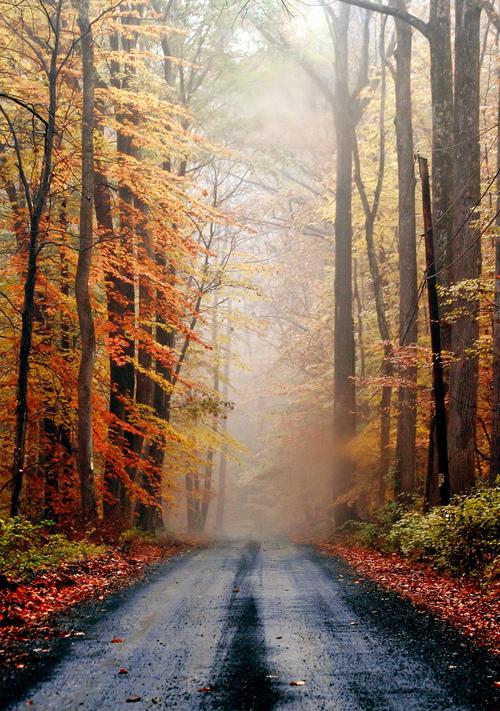 Осень в Нью-Джерси (США)