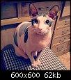 Нажмите на изображение для увеличения.  Название:Le chat.jpg Просмотров:500 Размер:62.2 Кб ID:430