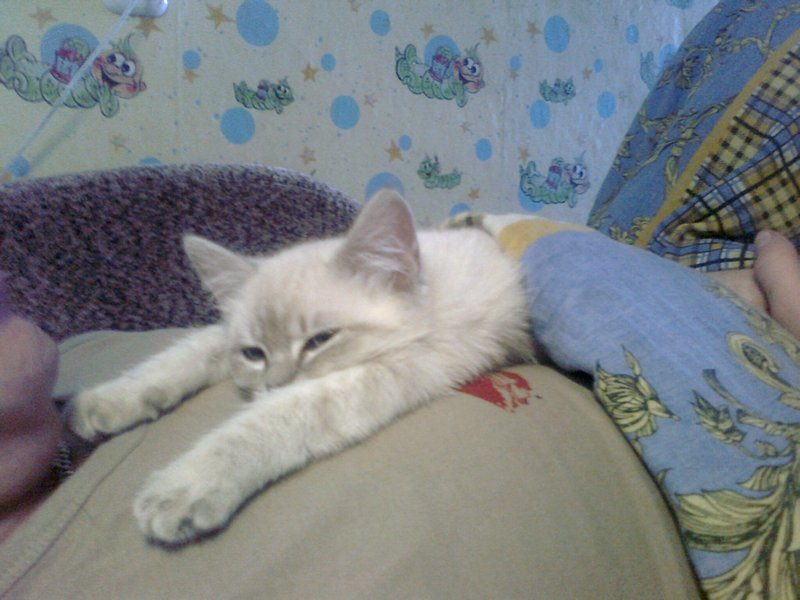 дворовая кошка Джесика